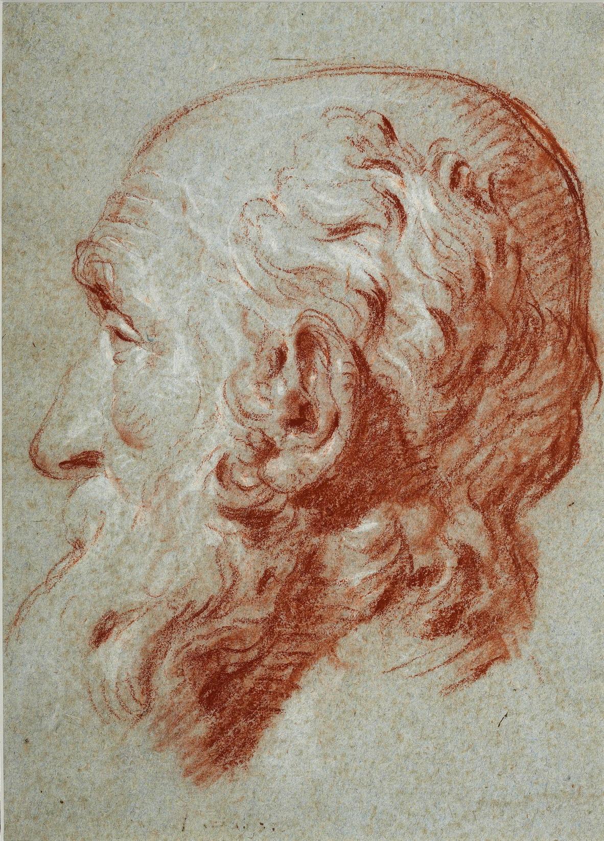 Cabeza de Giulio Contarini, después de Alessandro Vittoria., Giovanni Battista Tiepolo