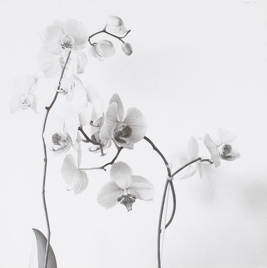 Flores (Orquídeas IV), Pere Santilari