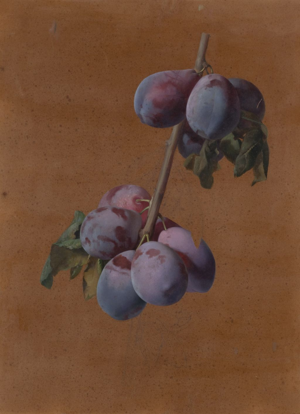 Josep Mirabent - Branch with plums