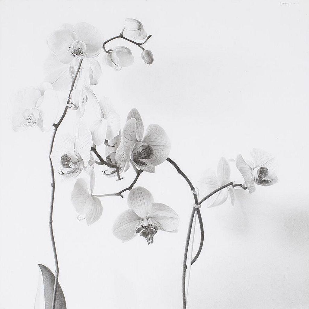 Pere Santilari, Orquídia